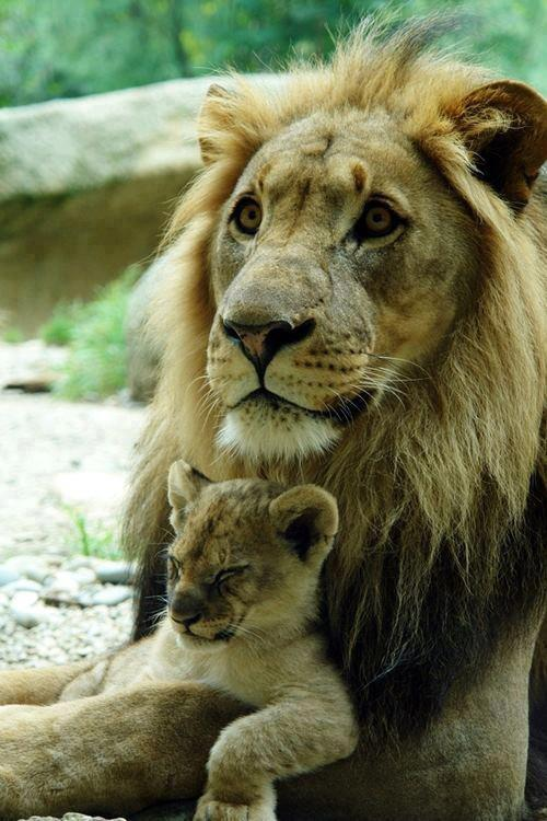 afetividade de pai