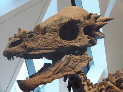 Pachycephalosaurus+2