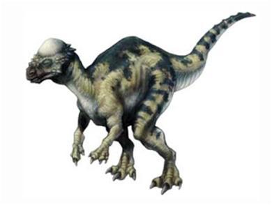 paquicefalossauro1
