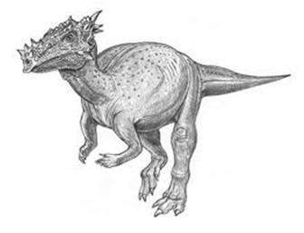 paquicefalossauro-3