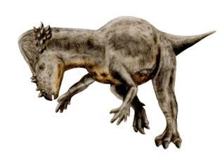 paquicefalossauro6