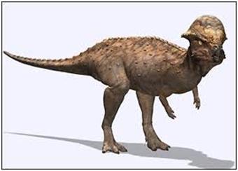 paquicefalossauro7
