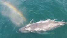 baleia e arco-iris