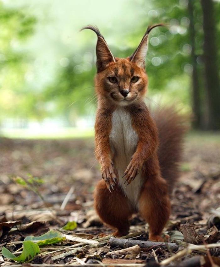 esquilo lince